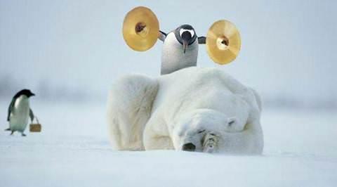 Penguin_vs_polarbear.jpg